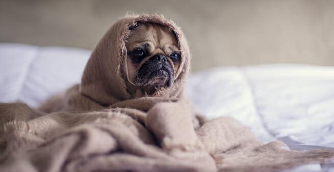 moody looking dog